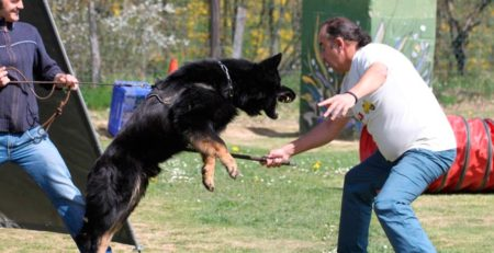 Cursos Lord-Can - Adiestramiento canino (3)