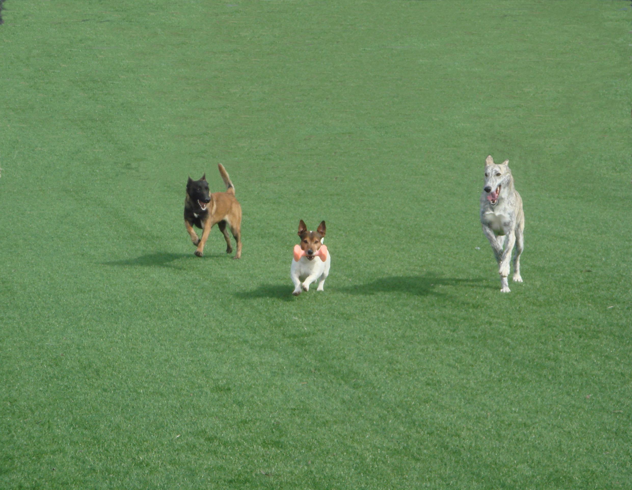 lord-can-galeria-de-fotos-residencia-canina (2)