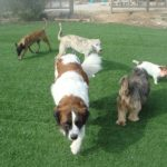 parques-adiestramiento-canino-lord-can